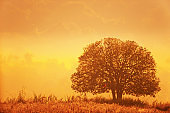 A tree stands on a grassland in the morning mist.