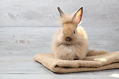cute baby brown easter bunny rabbit on sackcloth with wood background with lighting effect