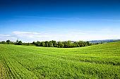 Green field in springtime rural landscape