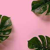 Frame of Monstera leaves on pink background with copy space. Minimalism flat lay. For lifestyle blog, book, article, social media. Square format for Instagram
