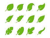 Set of green leaf of different design on white backgrund.