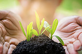 seedling in hands with blurry face man, growth concept, startup concept, spring concept