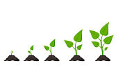 Gardening. Phases plant growing. Planting. Seeds sprout in ground. Vector illustration