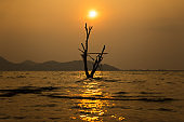 silhouette tree in water with sun and golden sky background for feel alone concept
