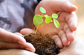 Sprout Plant and Soil Holding in Hands. Tree Growing and Prevent by Human. Environment and Ecology Concept