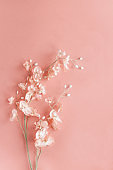 Pink Flower over a Pink Bokeh Background