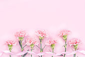 Beautiful elegance blooming baby pink color tender carnations in row isolated on bright pink background, mothers day greeting design concept,top view,flat lay,close up,copy space