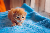 A small red-haired kitten sits on a blue mat.