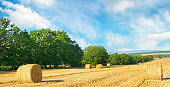 Straw bales on a wheat field and blue sky. Agricultural landscape. Wide photo.