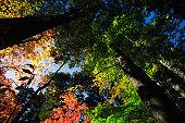 Autumn forest walk in Japan