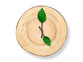 Wooden cross section clock with twig clock hand on white background.