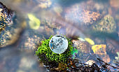 Glass globe on the mossy rock