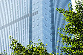 Modern office building and green leaves