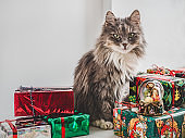Cute, charming kitten and bright gift boxes