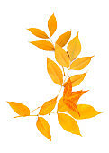 Color beautiful leaves on white background