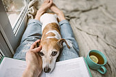 HAnd petting dog. real friendship. Woman legs in jeans, a book and a dozing dog. The atmosphere of home comfort. Enjoying day with my Jack Russell terrier