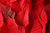 Bright red tropical leaves as background