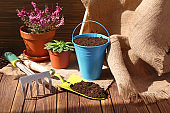 Pot plants and gardening tools on wooden table