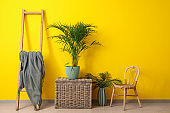 Green tropical plant with furniture near color wall