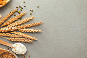 Spoons with wheat flour, grains and spikelets on grey background