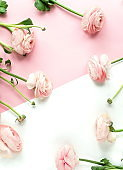 Flowers background . Pink flowers ranunkulus  on pale pink white background. Top view. Copy space. Holiday concept