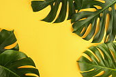 Green tropical monstera leaves on yellow background top view. Copy space