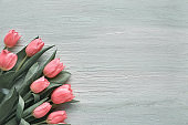 Springtime background with pink tulips on light green textured wood, text space