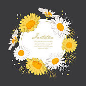 Flowers card Chamomile background Daisy wreath. Blooming daisies on a on a dark background. Elegant floral card with text space. Vector illustration