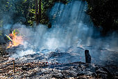 Fire in a tropical forest due to hot climate. a lot of smoke and ash, the sun's rays cut through the trees.
