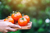 A woman holding tomatoes in a wooden tray