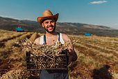 Handsome millennial farmer holding a crate in the field