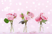 Beautiful rose flowers in vase on pink background. Greeting card for Womens day or Mothers day.