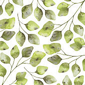 Abstract background with eucalyptus branches and leaves. Elegant botanical collection