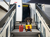 dog as pet in cabin in airplane