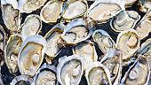 Opened Fresh Oysters on ice bucket