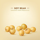 Soy bean vector eps10 illustration, organic and natural food in 3d