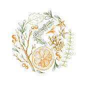 Vector hand drawn round illustration with Christmas natural herbal elements. Mistletoe, citrus and fir-tree branches.