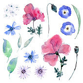 Watercolor collection of flowers and leaves. Poppies, cornflowers and daisies.