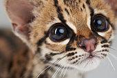 Portrait of curious wild cat
