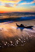 Sunset nature. Sea, sand and dry tree. Sunset landscape photography.