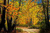 empty countryside dirt road with colorful autumn leaves and trees
