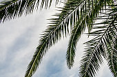 palm tree branches and leaves in nature