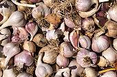 A lot of garlic. Garlic background.