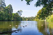 Peaceful place in the park. A lake in forest landscape.