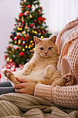 Adorable pet at home with winter holiday season decorations