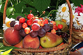 Juicy black grapes and apples, pears and peaches in a garden basket on an old wooden table