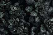 Dark leaves closeup view background