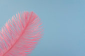 Pink artificial feather close up