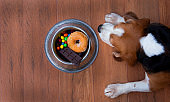 """Dog bowl With chocolate, candy, and donuts in a bowl of rice  These foods are all foods that are forbidden for dogs. Because may be sick And can cause death""""n"""