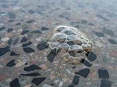 Bubbles on the terrazzo floor